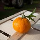 Mandarino 15Kg